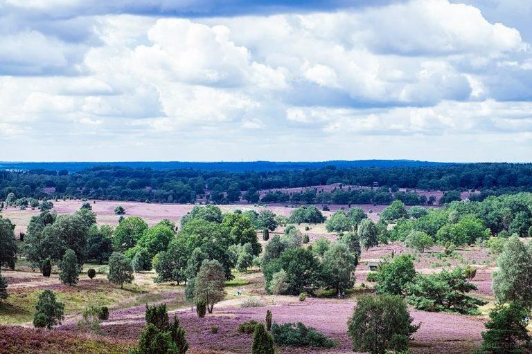 Lüneburger Heide VII