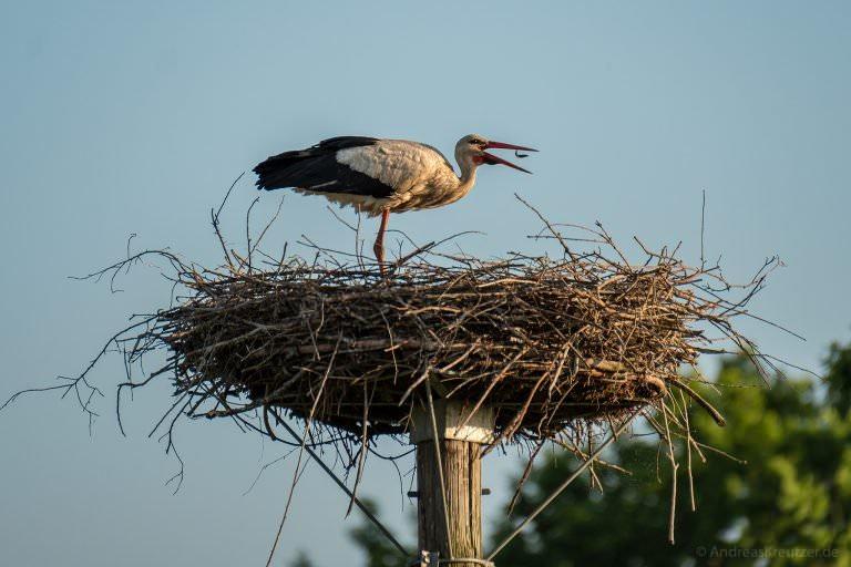 Storch beim Abendbrot