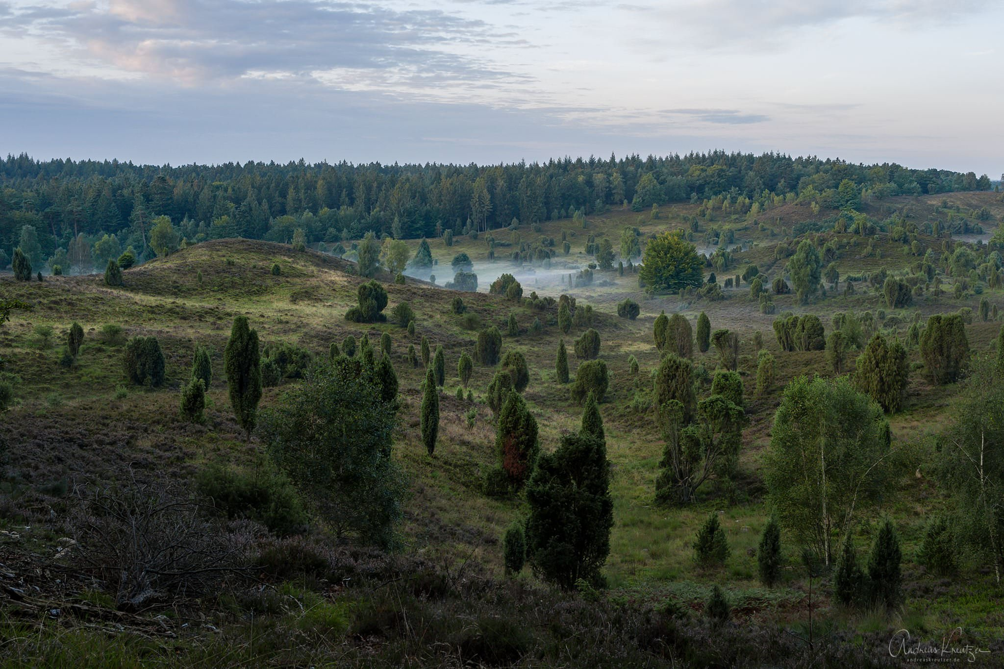 Totengrund in der Lüneburger Heide am Morgen