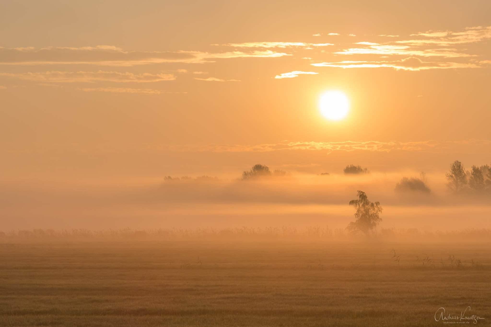 Sonnenaufgang mit Nebel in Billwerder