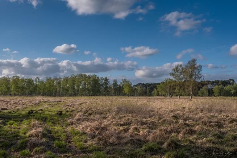 Duvenstedter Brook
