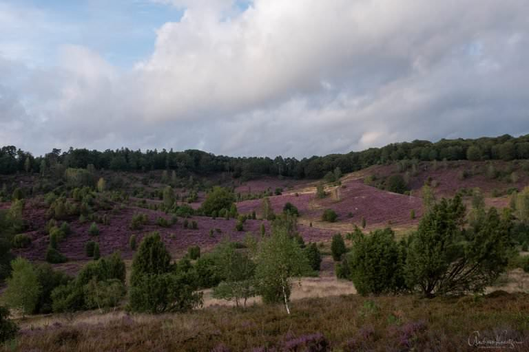 Lüneburger Heide Totengrund