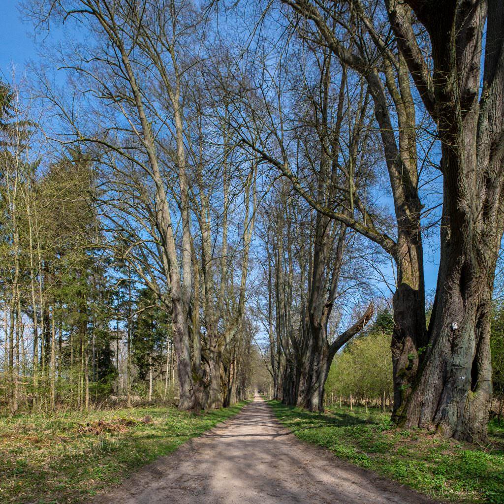 Allee bei Schloss Wotersen