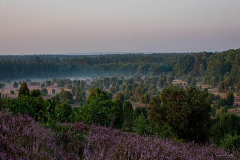 Steingrund in er Lüneburger Heide am Morgen