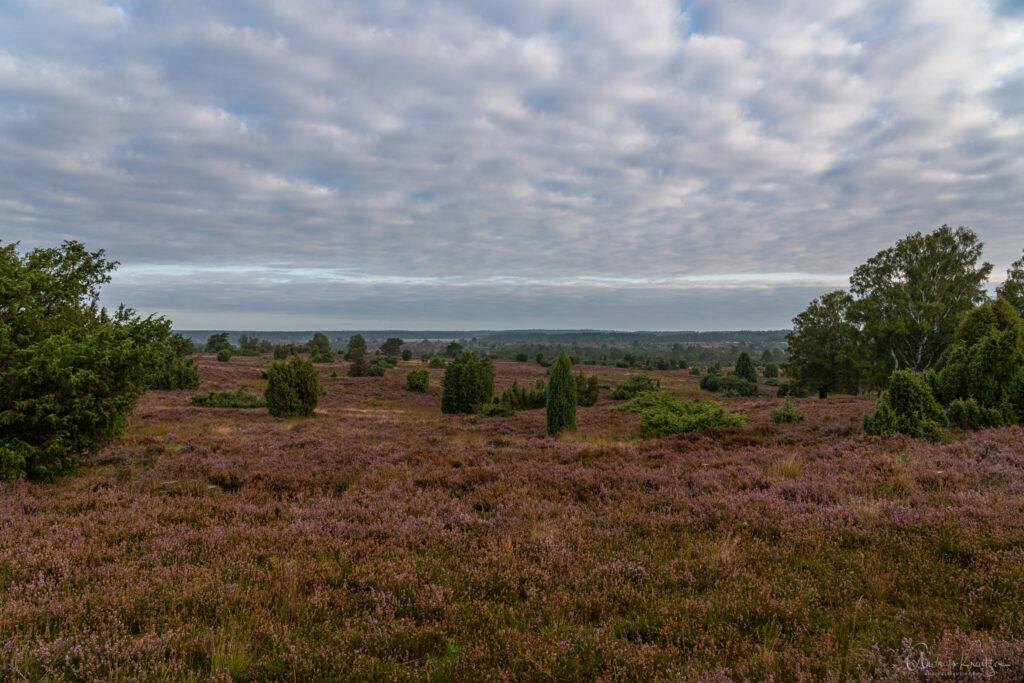 Lueneburger Heide bei Undeloh