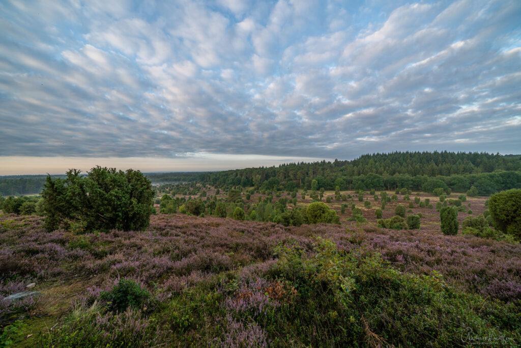Steingrund in Lueneburger Heide