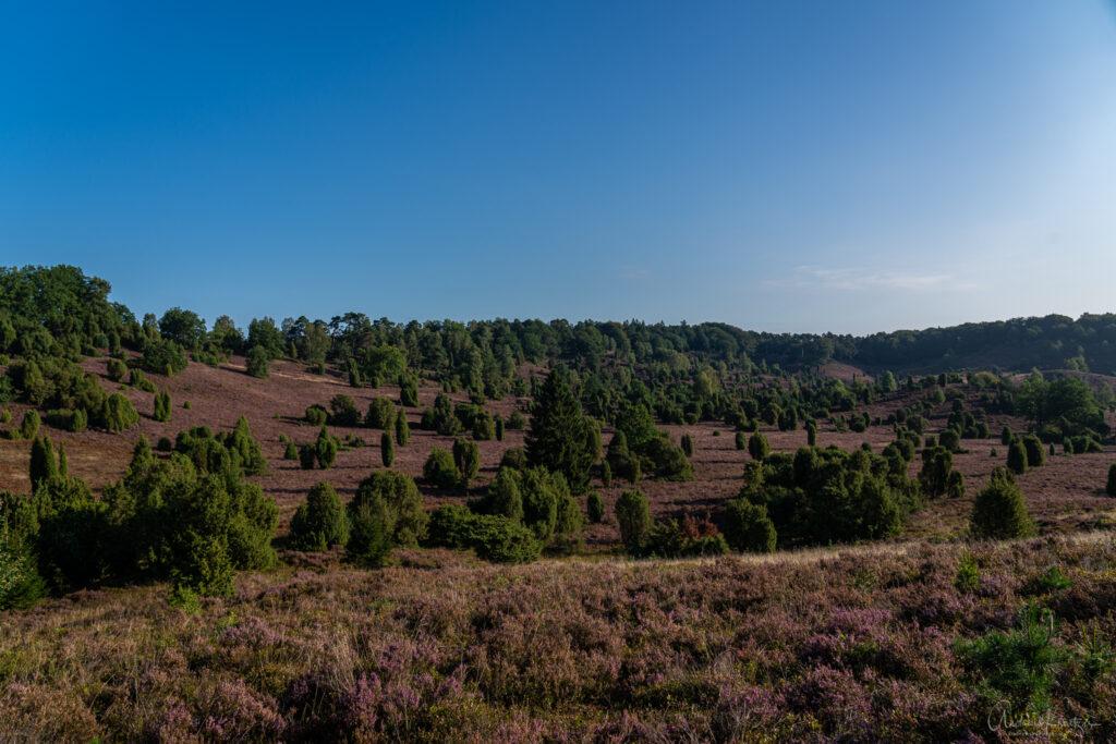 Totengrund in der Lueneburger Heide